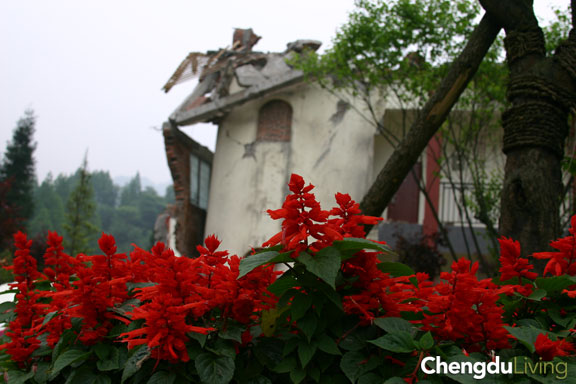 Qingcheng Shan flowers